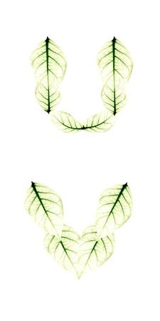 Leaf Alphabet letter U V photo