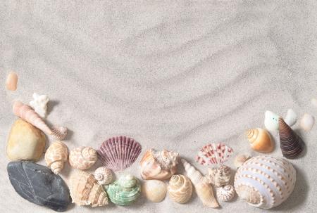 caracolas de mar: conchas de mar con arena como fondo