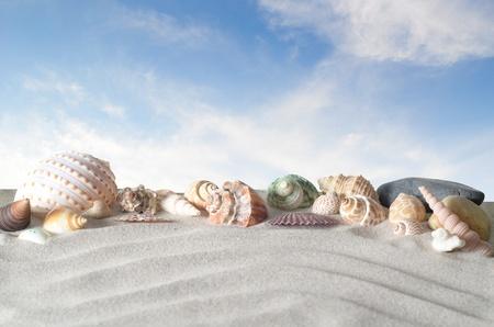 sea shells: sea shells with sand onblue shy as background