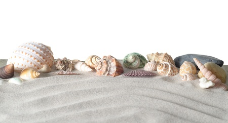 sea shells with sand isolated on white background photo