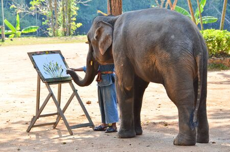 LAMPANG, THAILAND - NOV. 30: The mahout train elephant to paint. It shows up twice a day in The Thai Elephant Conservation Center (TECC) at Lampang. November 30, 2011 in Lampang, Thailand.