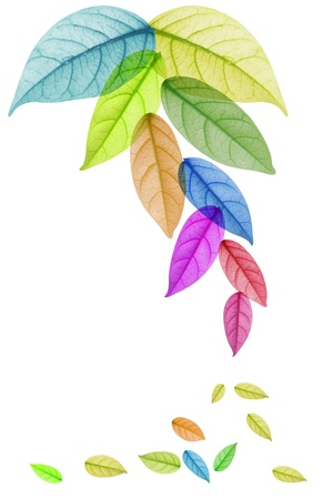 Design of Colorful leaf in white Background photo