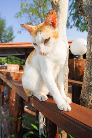 Cat is sitting on a fence Stock Photo - 14240517