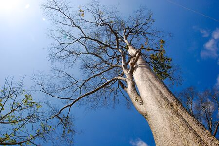 big tree on color background with blue sky Stock Photo - 14240542
