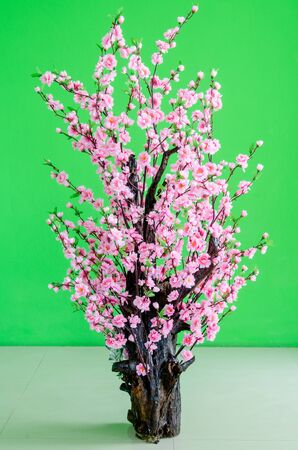 Blooming cherry trees on Green Background  photo