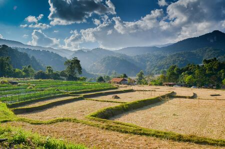 Rice fields in Chiangmai province,North of Thailand   photo