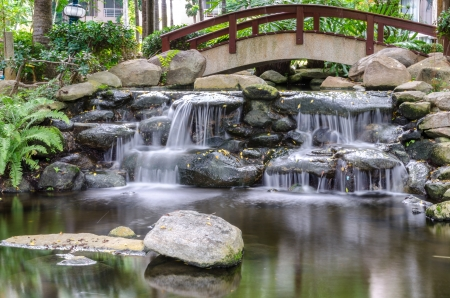 tropical shrub: Waterfall in the gaden