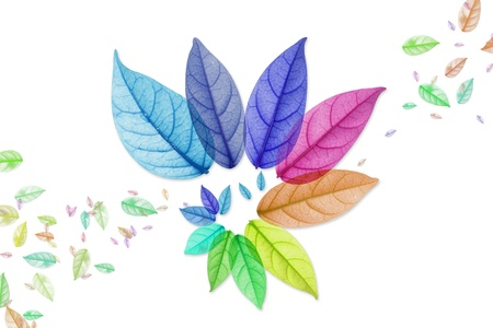 Design of Colorful leaf in white Background Stock Photo - 15086737