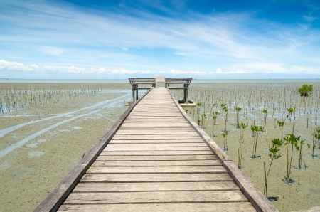 plateful: Wood path way among the Mangrove forest