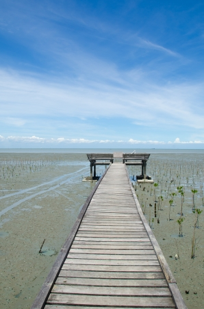 Wood path way among the Mangrove forest Stock Photo - 15513946
