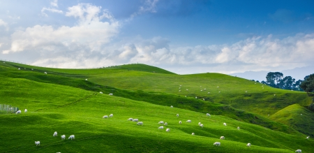 Land scape of green field and blue sky, view of New Zealand farm Stock Photo