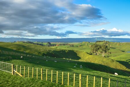 Land scape of green field and blue sky, view of New Zealand farm photo
