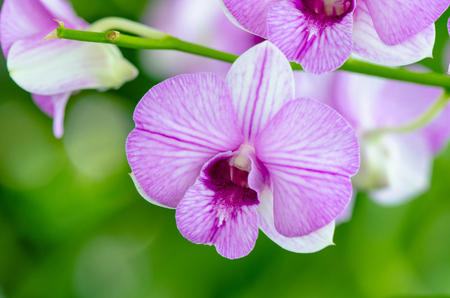 rare animals: Beautiful orchid  Stock Photo