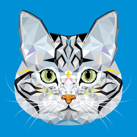 American Short hair Cat vector polygon geometric  Vector