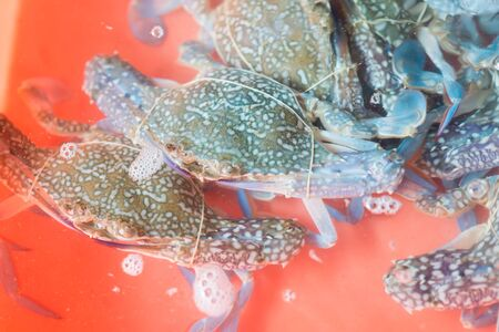 blue swimmer crab: Flower crab, Blue crab, Blue swimmer crab