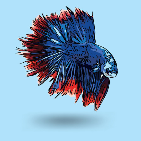 colrful: siamese fighting fish, betta fish Illustration