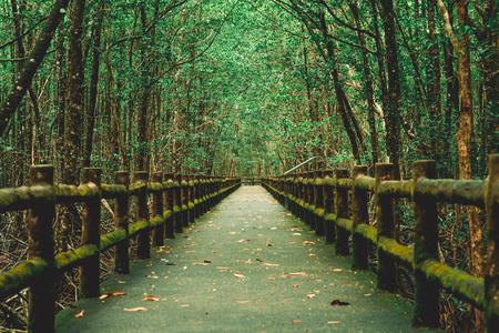 Mangrove forests around the footbridge Фото со стока
