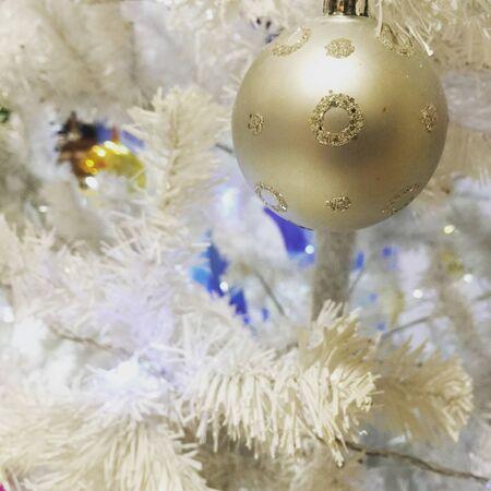 white: Extra ordinary white pine tree