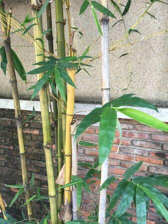 fence: Bamboo tree