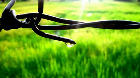 rice plant: Last rain drop on fence in rice plant before sunset Stock Photo