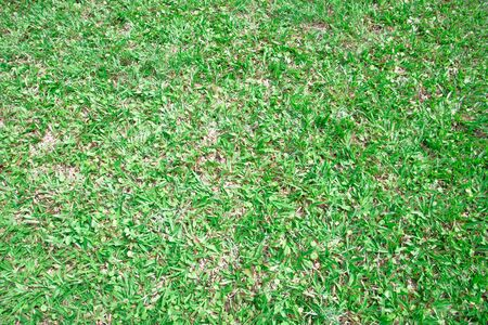 weeds: Green grasses and weeds