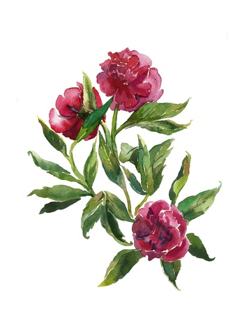bouquet of peonies watercolor Stock Photo