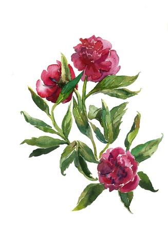 bouquet of peonies watercolor 免版税图像