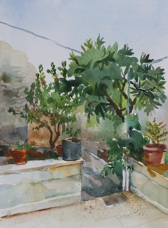cottage garden: corner of small garden