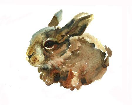 brown hare: small hare watercolor Stock Photo