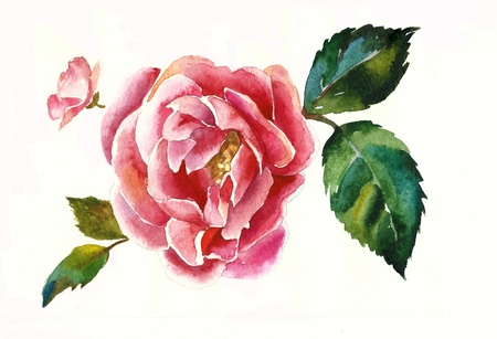 dogrose brunch watercolor Stock Photo - 12942924