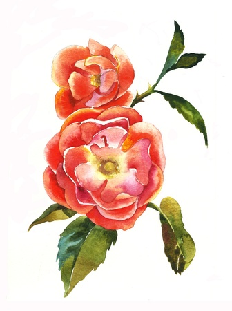 rose bush: red dogrose brunch watercolor Stock Photo