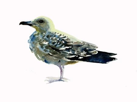 seagull watercolor Stock Photo - 12942914
