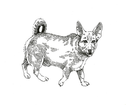 Pleading: senceless dog graphic