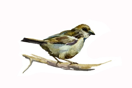 broun: sparrow watercolor