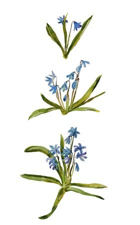 first blue flower group watercolor Foto de archivo