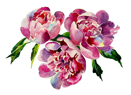watercolor flower: Three pink peonies watercolor Stock Photo