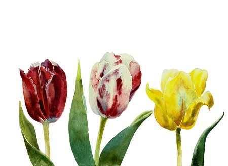 three tulips watercolor photo