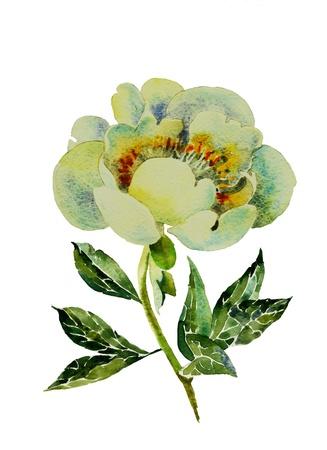 white peony watercolor