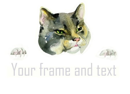 watercolor isolated cat head and paws holding the advertisement photo
