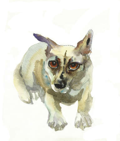 side viewing: small mongrel dog watercolor
