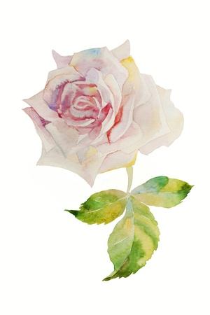 watercolor painting pink rose head Foto de archivo