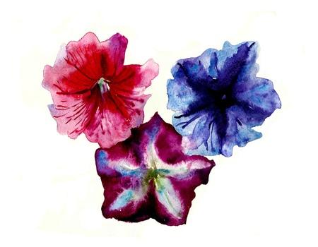 watercolor three multi color petunias flower head