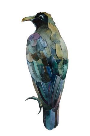 black raven watercolor painting isolated Stock Photo