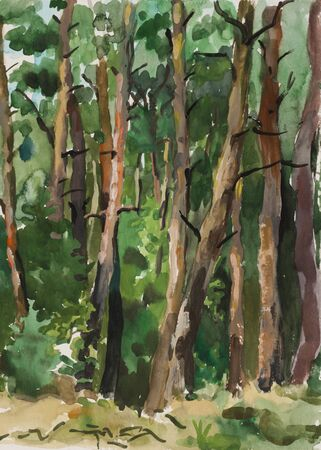 Pine forest watercolor landscape photo