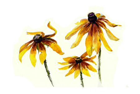three yellow rudbeckia garden flowers watercolor painting photo