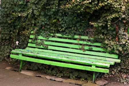 green wooden bench in ivy lush photo