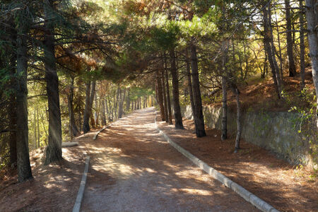 Walkroad in pine forest with sun beams at Crimea mountains photo