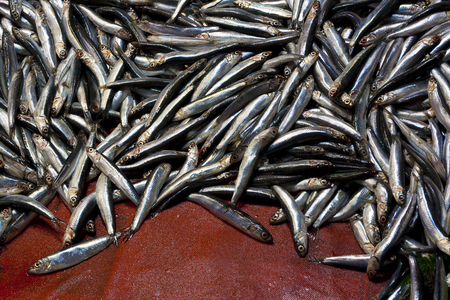 dead fish: fresh smelt fish heap in a sea market