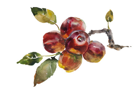 Red apples bunch on the tree twig original watercolor on paper isolated illustration Stock Photo