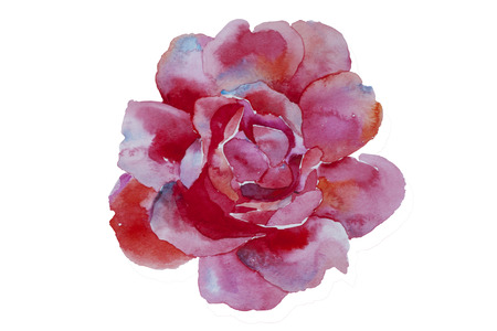 watercolor art pink rose original illustration isolated on white background